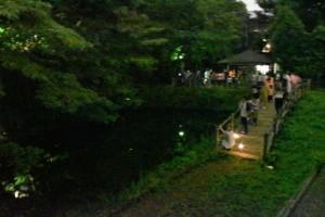 ホタルの静かな光に集まる人たち(特別養護老人ホームブロン隣りのホタル池で)
