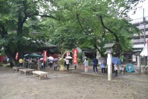 敷島神社の茅の輪くぐり